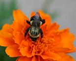 Beeworking thumb155 crop