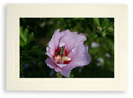 Bee Looking Like It Was Photoshopped (Photo Print)