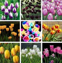 Tulip seeds,Tulipa gesneriana,potted plants, planting seasons- 20seeds/pack - $2.79