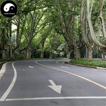 Buy Platanus Tree Seeds 100pcs Plant Platanus Orientalis Tree For Xuan L... - $9.99
