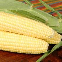 SHIP FROM US BODACIOUS RM HYBRID CORN - 20 g PACKET ~100 SEEDS - NON-GMO... - $19.56