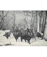 HUNTING Wild Boars in Forest - 1878 Fine Quality Print - $35.96