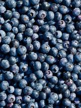 300+ *Super Sweet n Huge* BLUEBERRY SEEDS! Highbush Mix Perennial Fruit ... - $13.99
