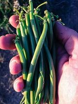 15 Seeds Tendergreen Snap Bean - $13.86
