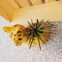 """Air Plant in Jaguar Animal Planter, 4"""" yellow ceramic, Live Airplant, Jay Jaguar image 3"""