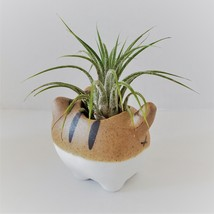 """Air Plant in Cat Planter 3"""", Kitty Ceramic Pot with Emotion Face image 5"""