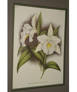 12 Lindenia Orchid Limited Edition Flower Prints Collectible Wall Art De... - $104.49