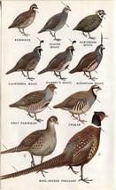 Western North American Birds: Pheasant, Partrid... - $9.79