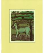Blaaubok. Shawn Rice. Extinct Animal Species Art. Vintage 1981 8X10 print - $15.79