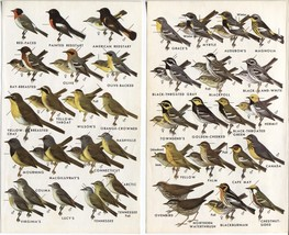 Western North American Birds: Warblers. SET of 2 small 1961 prints. 7 X 4 - $12.00
