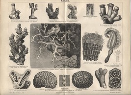 """Coral"" (Korallen) from Antique German Encyclopedia. 1888 print. - $17.77"