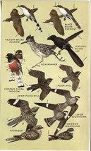 Western North American Birds: Cuckoo, Trogon, G... - $9.85