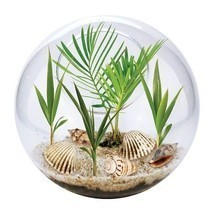 Terrarium Garden Bowl Grow Your Own Beach Scene Palm Trees Seashells Gla... - $24.70