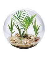Terrarium Garden Bowl Grow Your Own Beach Scene Palm Trees Seashells Gla... - €21,52 EUR