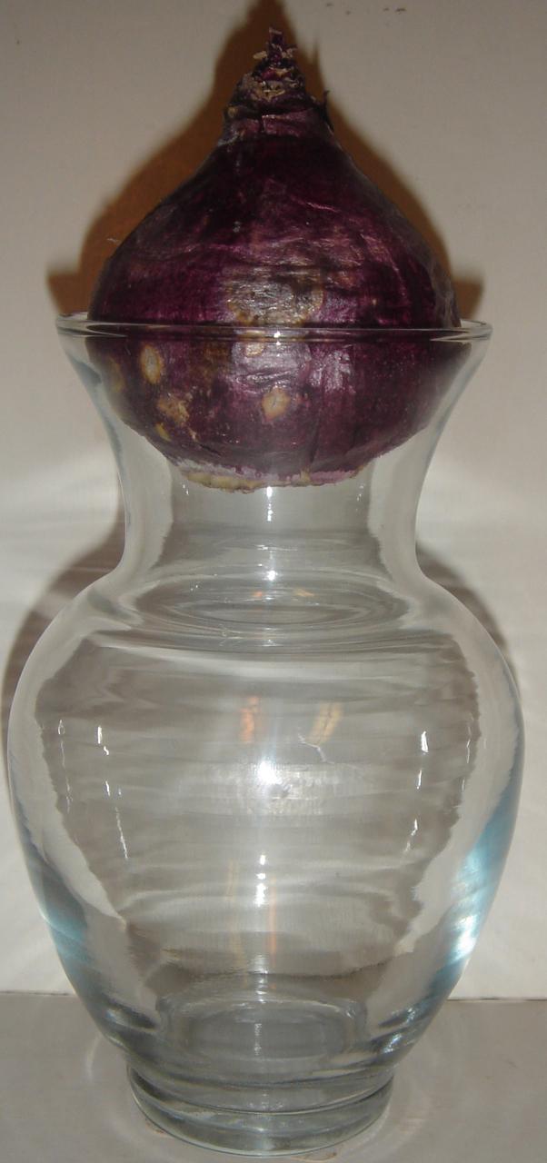 Vintage Clear Glass Forcing Vase / Jar