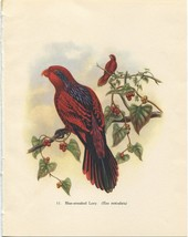 Tropical Birds: Blue-streaked Lory. John Gould. 1948 vintage print. - $16.61