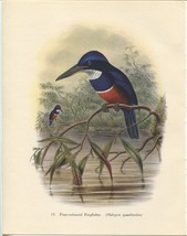Tropical Birds: Four-coloured Kingfisher. John Gould. 1948 vintage print. - $16.61