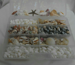 600 pc  sea Shells crafts jewerly Hebrew cone conch cowrie assorted simp... - $58.05