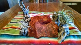 Cholla Wood Perfect for Air Plant Stands, Crafts Lot of 6 pc. (Lot 3) - $24.75