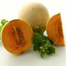 SHIP FROM US ORGANIC HEARTS OF GOLD MELON SEEDS - 2 Oz SEEDS - NON-GMO, ... - $82.56
