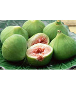 GREEN FIG  64oz (4lbs) - Candle Fragrance Oil FO - $28.99