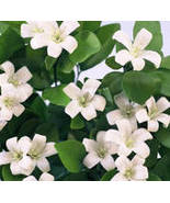NEROLI LIME 16oz (1 LB) - Candle Fragrance Oil FO - $13.98