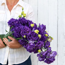 Voyage 2 Blue Pelleted Lisianthus  / Lisianthus Flower Seeds - $21.00