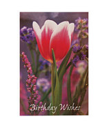 All Occasion Cards - Set Of 24 - $13.73