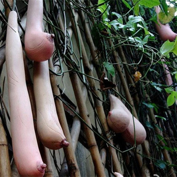 Egrow 50 Pcs/Pack Vietnam Milk Funny Melon Seeds Garden Balcony Vegetable Fruit