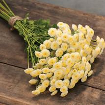 Vegmo Sunny Ball Pelleted Matricaria Seed / Vegmo Sunny Ball  Flower Seeds - $21.00
