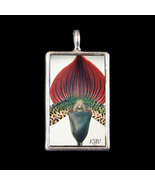 Orchid - Photograph Pendant by KV - $19.99
