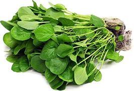 2000 Seeds Barbarea Verna Vegetable Salad - $13.86