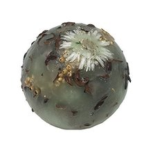 Habersham Candle Company Sage Wax Pottery Sphere - $35.00
