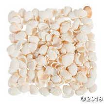 Natural Clamrose Sea Shells - $6.24