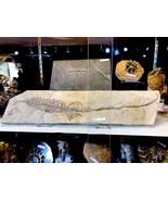 MESOSAURUS LIZARD DINOSAUR FOSSIL TREASURES OF THE JURASSIC PIRATE GOLD ... - $12,500.00