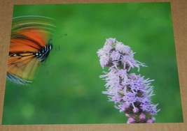 BUTTERFLY PHOTO 8X10 - $1.98
