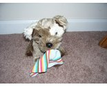 Animal alley puppy plush with sock thumb155 crop