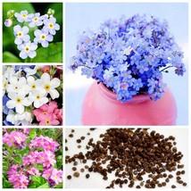 50 PCS Garden Flowers Perennial Plants Woodland Myosotis Sylvatica Rare ... - $5.12