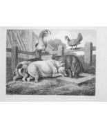 1801 ORIGINAL ETCHING Print by Howitt - Farm Yard Pigs Hen & Rooster - $30.60
