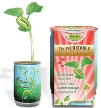 Magic Plant I Love You Bean Seed Plant Message Word Nature's Greeting Grow - £7.08 GBP