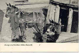 Coal Mine Mule Boys Wilkes Barre Pennsylvania Circa 1906 Post Card - $15.00