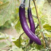 20 Seeds of Fengyuan Purple Eggplants - $16.83