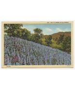 1944 – Wild Flowers in California, Lupine Flowers - Used - $4.99