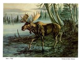 "DUCKS UNLIMITED PRINT ""FOG"" Canadian Mallard Pintail DU RMEF MOOSE - $3.95"