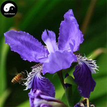 Buy Blue Butterfly Flower Seeds Plant Iris Tectorum Flower Garden - $5.99