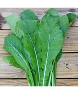 SHIPPED FROM US 34,000+TENDERGREEN MUSTARD GREENS Organic Non-GMO Seeds,... - $43.00
