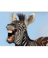 Zebra 43038M OEM Printhead for Models 110PAX3 RH - $540.00