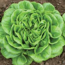 Salanova Green Butter Pelleted Lettuce Seed, Vegetable Seeds, Ship From US - $20.00