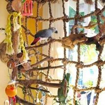 Parrot Bird Cage Toy Game Hanging Rope Buckles Swing Climbing Ladder Bir... - £6.88 GBP
