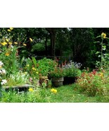 SHIP FROM US 1,800 Southeast Wildflower Mix Seeds, ZG09 - $17.96